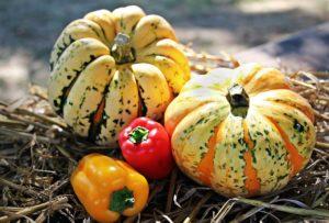 Odporność organizmu jesienią